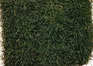 Korean Grass